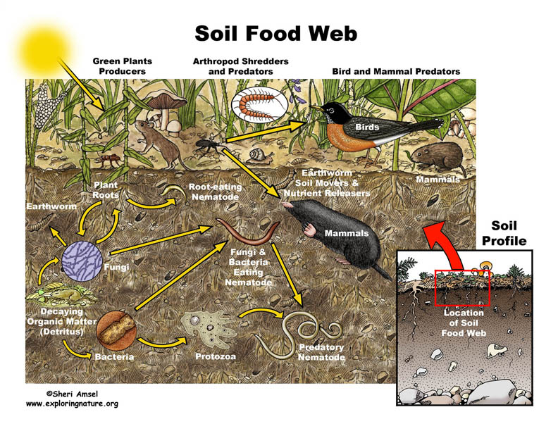 soil food web - Planting up
