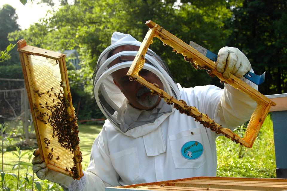 Keeping bees at Westbury Arts Centre