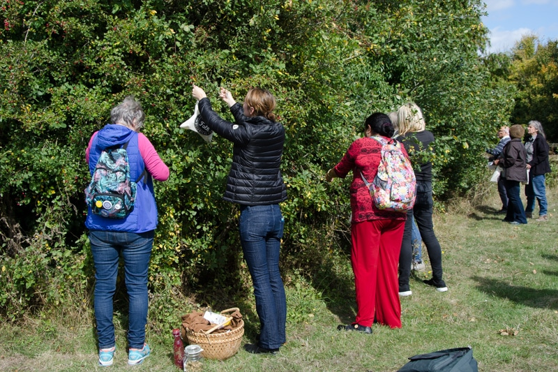 Foraging the hedgerows