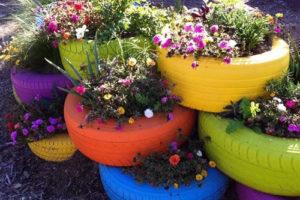 Growing flowers in tyre planters