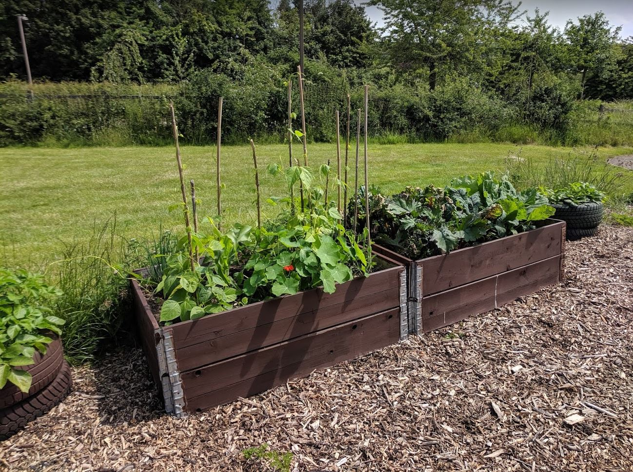 Raised beds looking full of peas, beans and brassicas