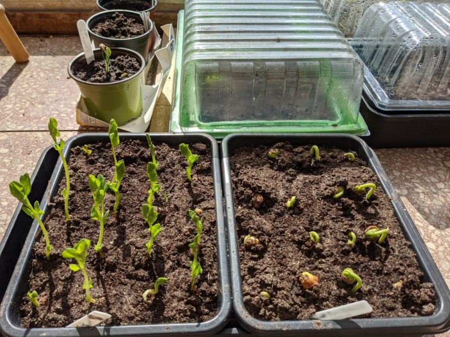 Grow your own: Seedlings